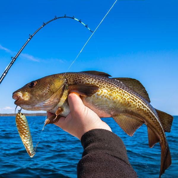 Belles prise de pêche en mer
