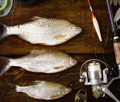 Belles prises de pêche en mer