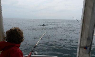 Pêche en Mer et rencontre de dauphins